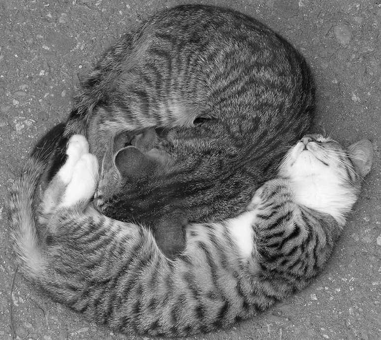 Кошки, коты, котята и прочие тигры