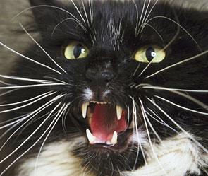 Как кот Михей ментов порвал