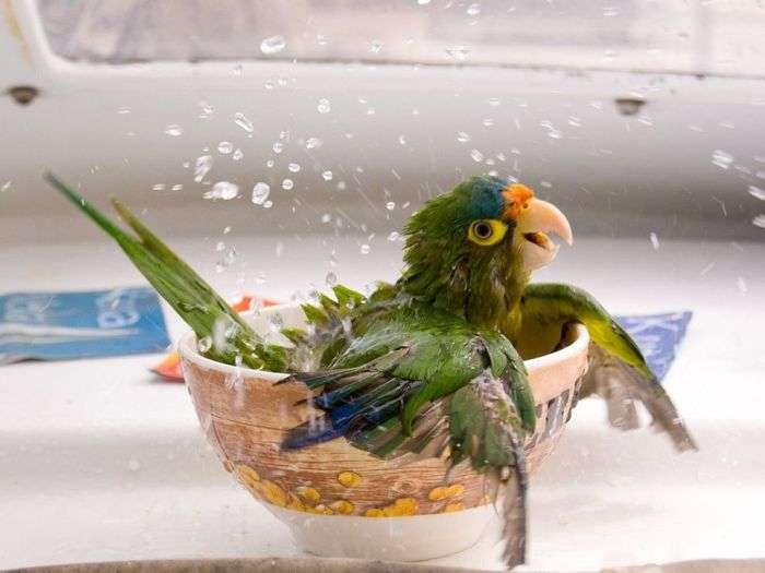 Попугайная ванна
