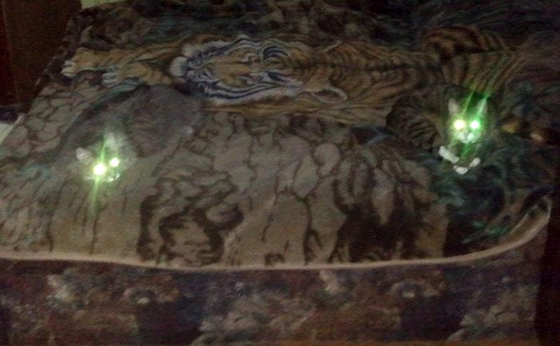 Инопланетные коты с изумрудными глазами
