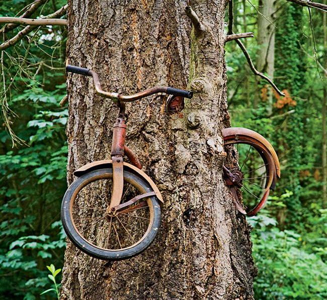 Велосипед внутри дерева