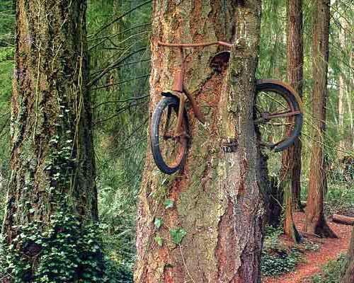 Велосипед в дереве