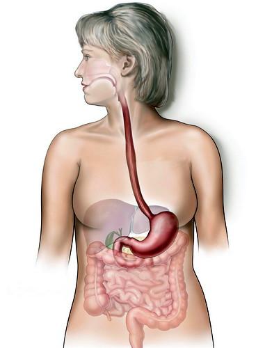 О пельменях в кишечнике