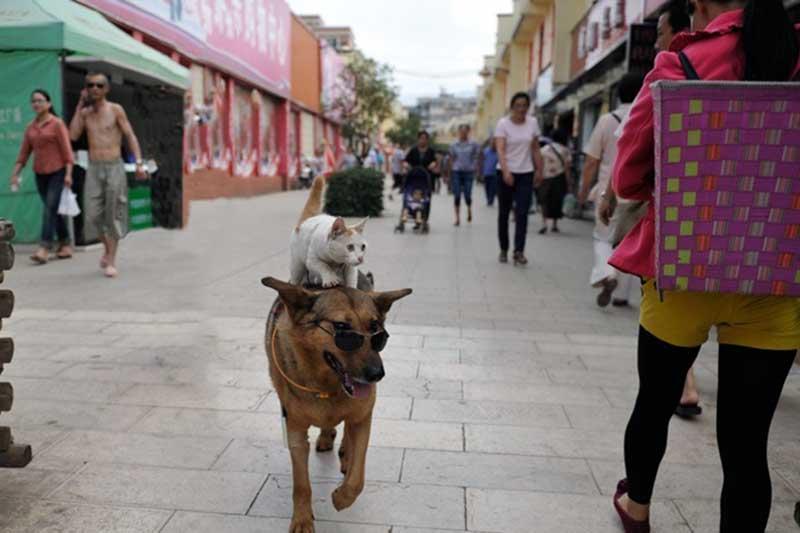 Ванцай и Мими - кошачья-собачья сладкая парочка