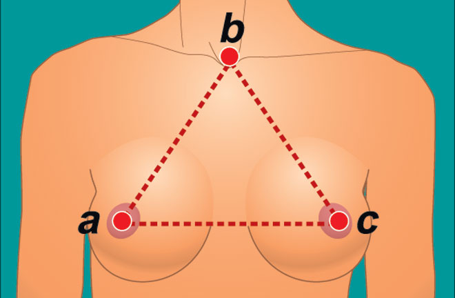 Геометрия груди