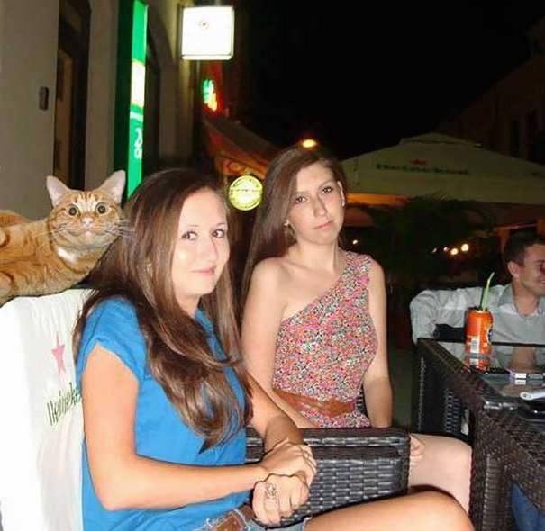 Кот-астрофы