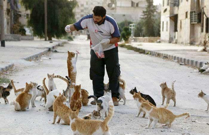Человек-кот из Алеппо