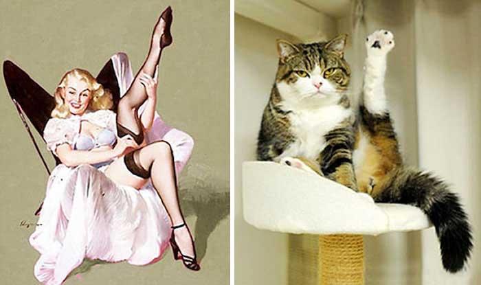котики, девушки, пин-ап