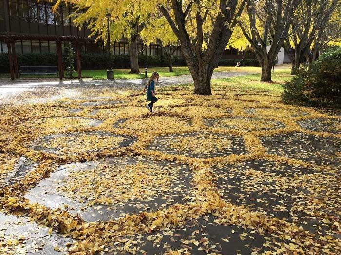 Узоры из опавших листьев