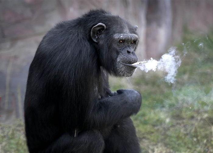 Об эволюционной теории