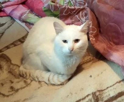 Это Барсик. Он - кот. И он хочет жить.