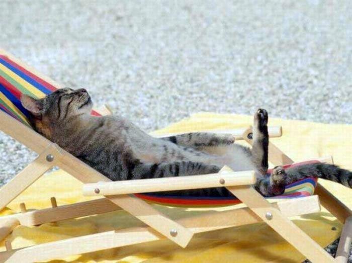 Релаксация по-кошачьи