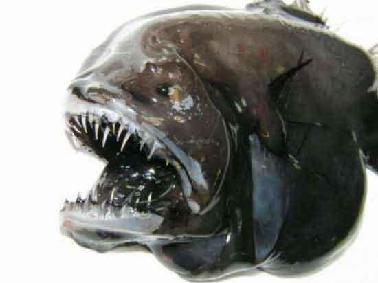Гренландские рыбы-монстры
