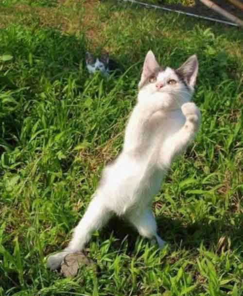 Забавные кошки в смешных позах