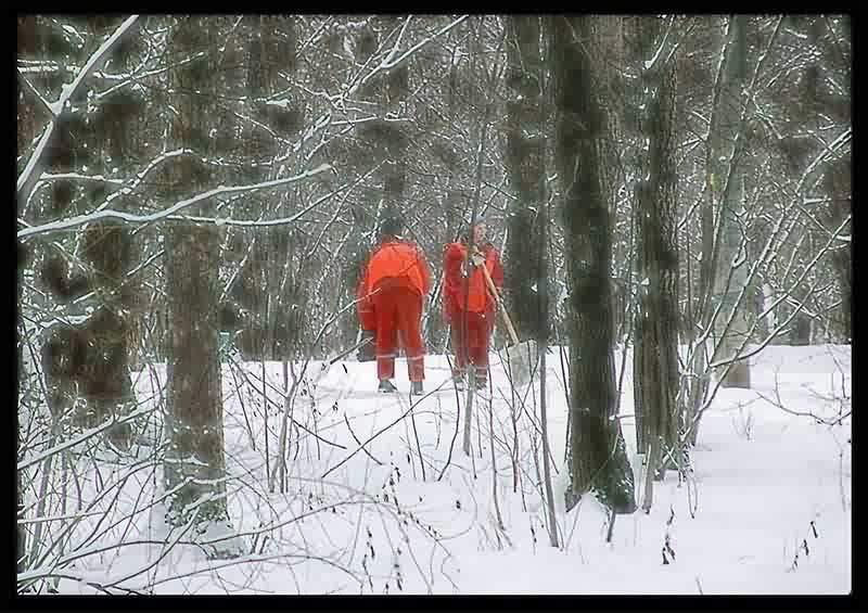 Снегири с лопатами